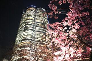 桜の写真・画像素材[542125]