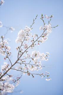 木の上に座っている鳥の群れの写真・画像素材[4446589]