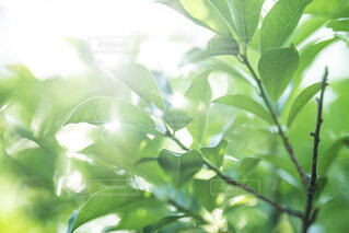 木の枝のクローズアップの写真・画像素材[4454746]