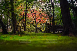背景に木々のある大きな緑のフィールドの写真・画像素材[4465154]