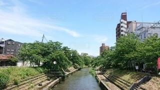 新緑のいたち川の写真・画像素材[4466183]