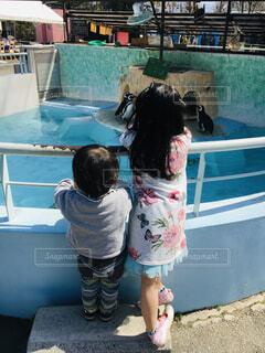 ペンギンを見ている姉と弟の写真・画像素材[4588691]