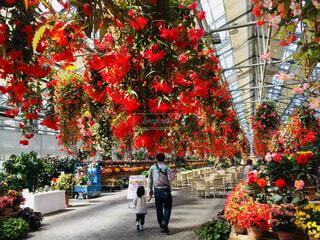 温室の花を鑑賞する親子の写真・画像素材[4588689]