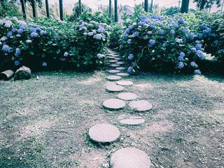 日本寺の紫陽花祭りの写真・画像素材[4558772]