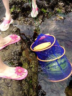海でスイカを冷やす女性2人の足元の写真・画像素材[4465376]
