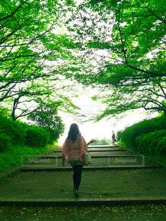 新緑の下の階段を歩く後ろ姿の女性の写真・画像素材[4466743]