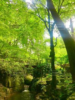森の中を流れる川の写真・画像素材[4466819]