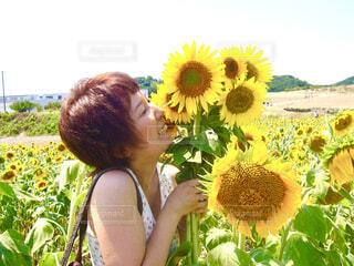 ひまわり畑でひまわりの束を抱く女性の写真・画像素材[4468195]