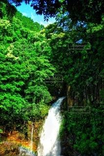 森の中の大きな滝の写真・画像素材[4455280]