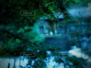 松からのぞむ灯籠の写真・画像素材[4455369]