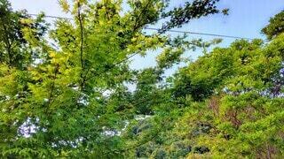 新緑の木々の写真・画像素材[4463816]