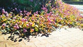小さなピンク色の花の写真・画像素材[4464008]