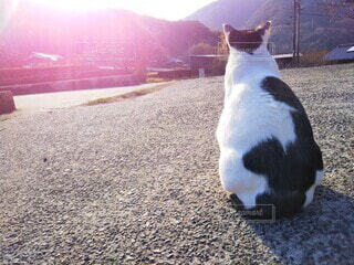 朝日を眺める猫の写真・画像素材[4464009]