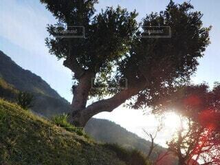 逆光に照らされる樹木の写真・画像素材[4464007]