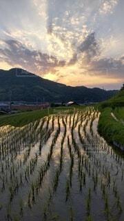 田んぼの水面に映し出される夕空の写真・画像素材[4464017]
