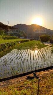 田んぼに映り込む山と夕日の写真・画像素材[4464015]