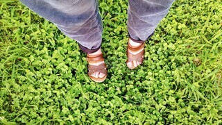 クローバーの草むらと人物の足の写真・画像素材[4464243]