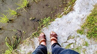 田んぼの前に立つ人の足もとの写真・画像素材[4464242]