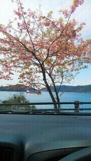車内から眺める葉桜と海の写真・画像素材[4467036]