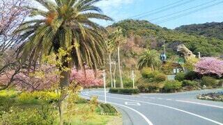 笠戸島にある国民宿舎大城の春景色の写真・画像素材[4467035]