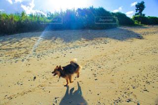 砂浜の上を歩く犬 - No.1193186