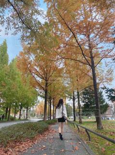 木の隣の通りを歩いている人の写真・画像素材[4588747]