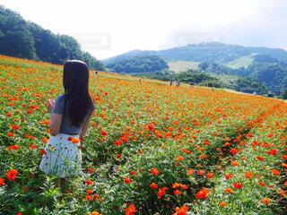 花畑を見ている人の写真・画像素材[4588777]