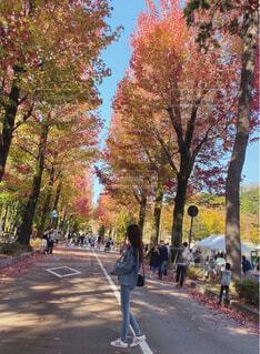 並木道を歩く人の写真・画像素材[4590892]