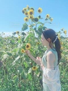夏のひまわり畑にての写真・画像素材[4653029]