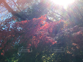 フォレスト内のツリーの写真・画像素材[875687]