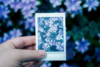紫陽花と写真の写真・画像素材[4560628]