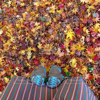 ふかふか絨毯の写真・画像素材[4466227]