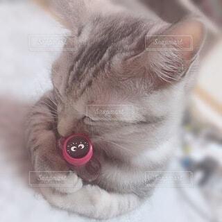 猫,お酒,かわいい,ペット,癒し,クライナー