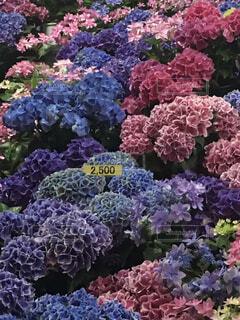 花園のクローズアップの写真・画像素材[4556265]