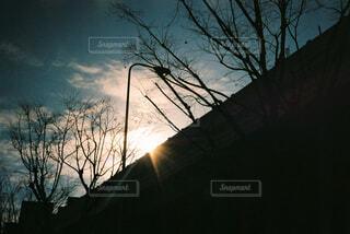 夕暮れの樹々と空の写真・画像素材[4463130]