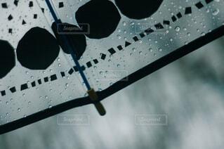雨の日にお気に入りの傘をさしての写真・画像素材[4467513]