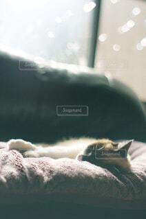ソファの上で昼寝する猫の写真・画像素材[4493646]