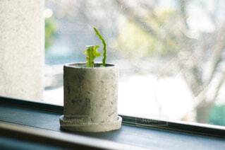 窓辺に置いた観葉植物の写真・画像素材[4500521]