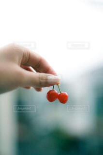 さくらんぼを持つ手の写真・画像素材[4560388]