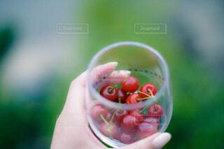 さくらんぼの入ったコップを持つ手の写真・画像素材[4560434]