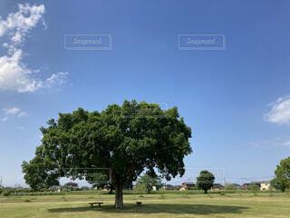 風景,空,木,雲,ベンチ,景色,木陰,陰
