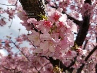花,屋外,樹木,草木,ブルーム,ブロッサム