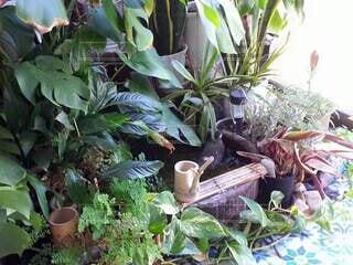 屋内,植物,室内,縁側,観葉植物,グリーン,ビオトープ,ムクドリ,椋鳥,南国テイスト,観葉植物レイアウト