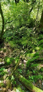 苔むす森の写真・画像素材[4539749]