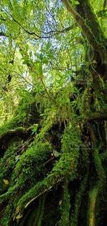 森の中の緑の植物の写真・画像素材[4539752]