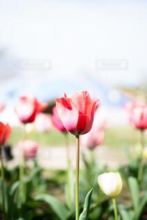 花のクローズアップの写真・画像素材[4466337]