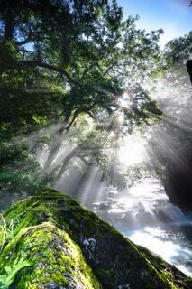 背景に木々のある滝の写真・画像素材[4466354]