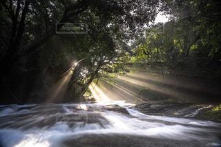 背景に木々のある滝の写真・画像素材[4466357]