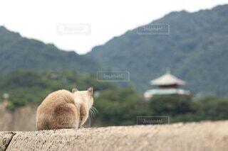 尾道の猫の写真・画像素材[4790615]