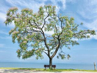 ベンチと桜の写真・画像素材[4464282]